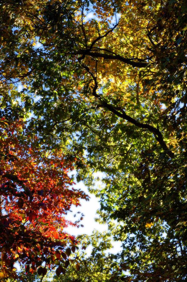 Kaleidoscope Canopy