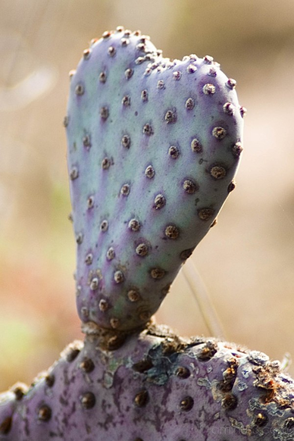 A cactus with heart