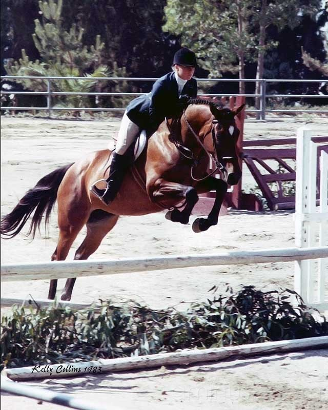 Jumping show horse