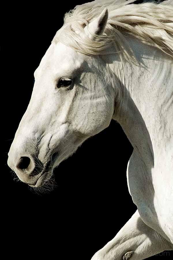 Peggy Prado Equestrian Center