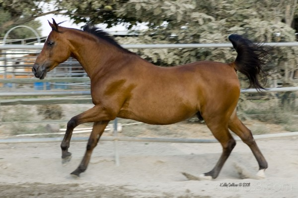 A galloping Bean