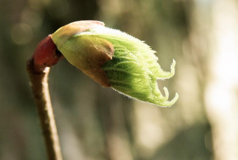 Springter