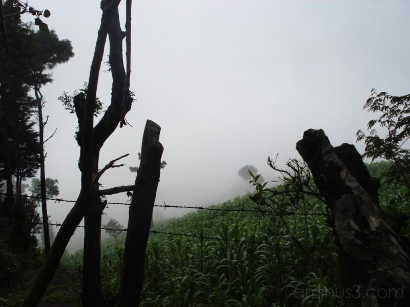Maiz growing on Volcan Pacaya