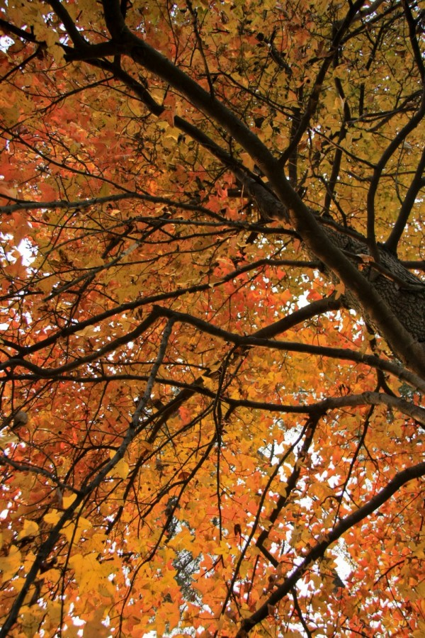 Hangzhou Botanical Gardens - Tree