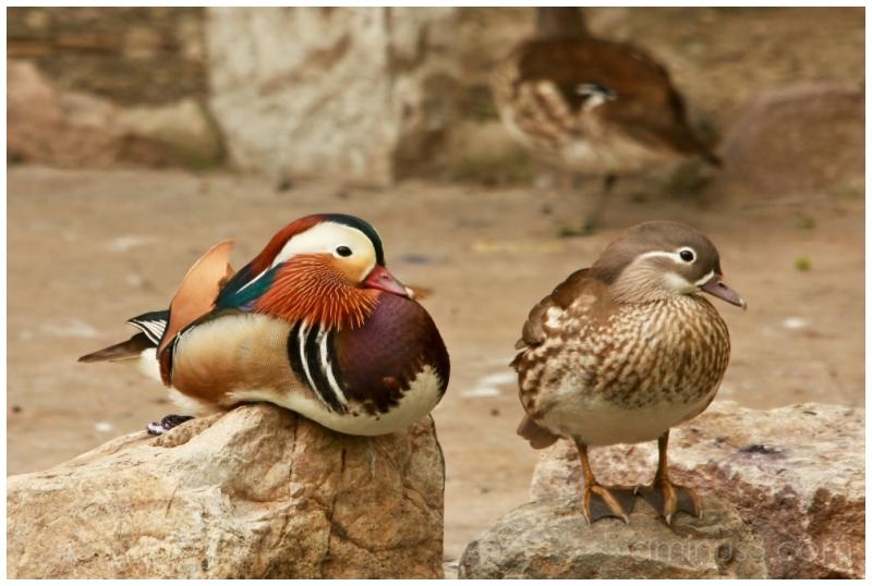 China, Shanghai, Shanghai Zoo
