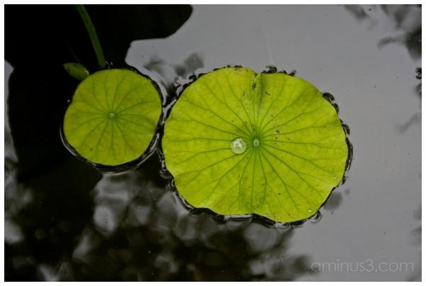 China, SuZhou, Garden