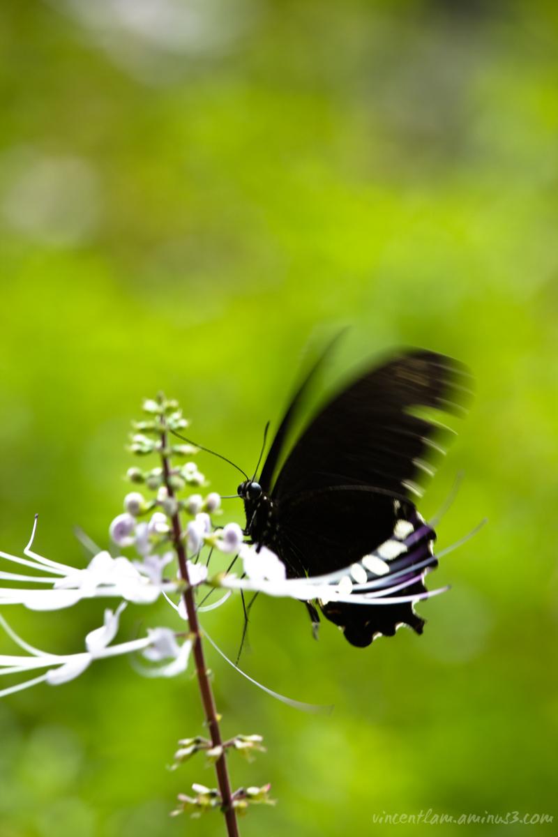 China, HongKong, Butterfly