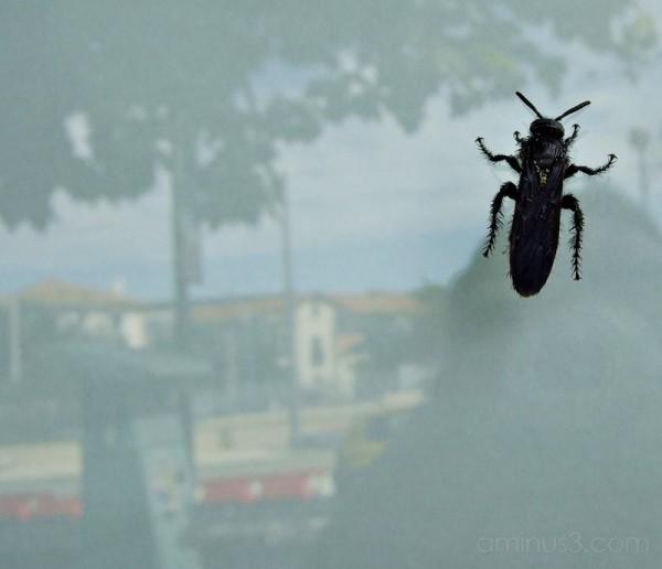 Black bug on store window.