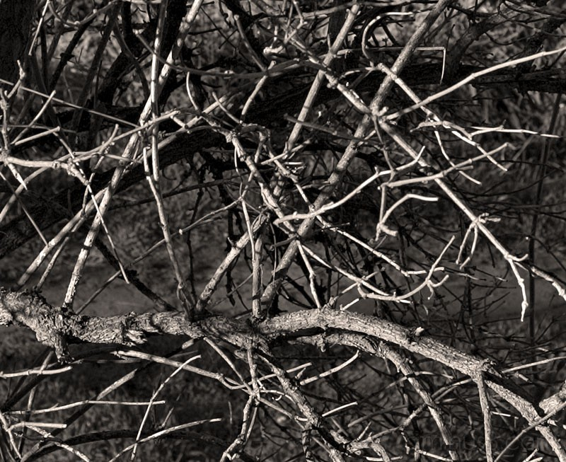 Branches aloong the river Lez.