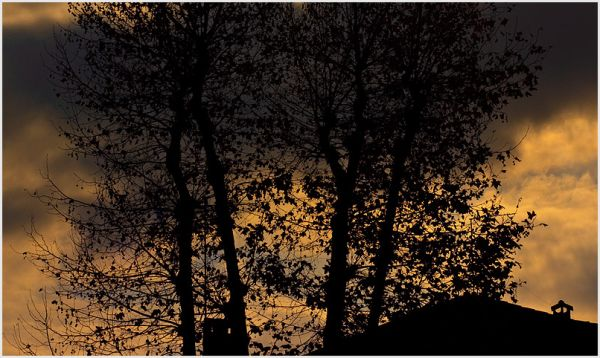 Dark trees with a sunset and clouds behind them.