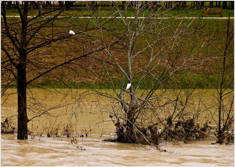 Two birds in trees above raging river.