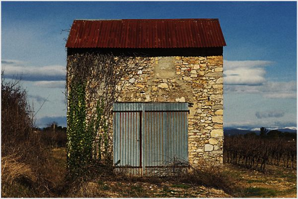 Small stone building in a wine orchard.