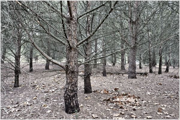 A group of trees in winter.