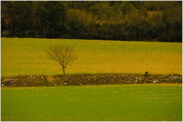 Stone wall and lone tree in the french countryside