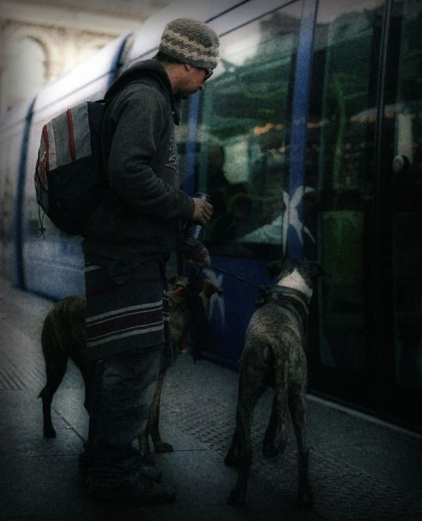 Homeless man with his dogs