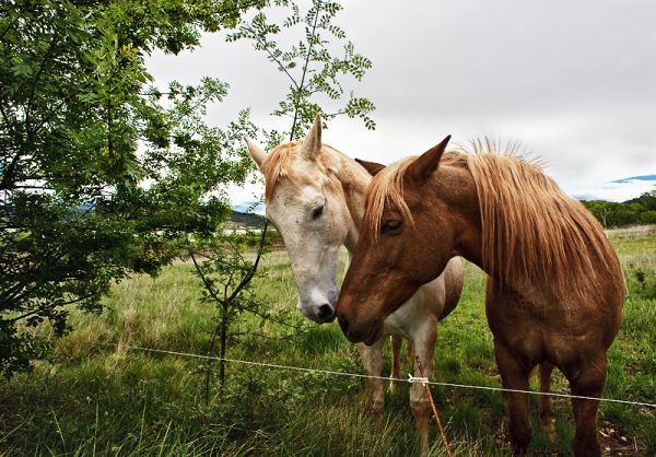 Two friendly horses in a field.