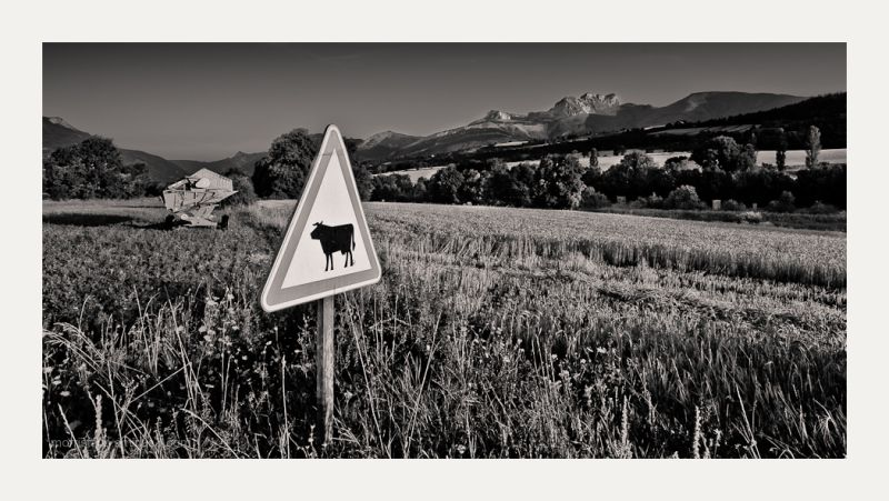 Animal crossing sign for cows in the alps.