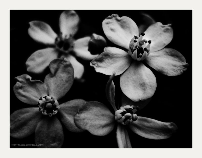 Flowers in black and white.