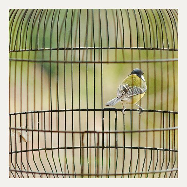 Bird in a bird cage.