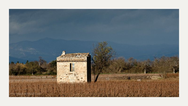 Stone building in a vineyard.