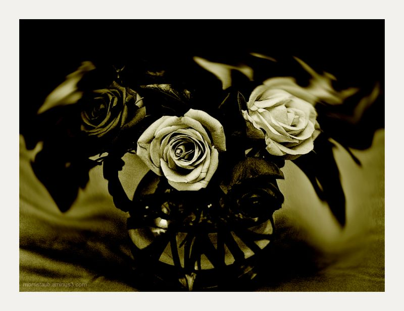 Flowers in a vase done in sepia tones.