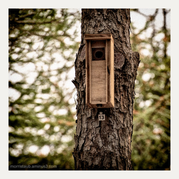 Birdhouse in Grammont Parc, Montpellier, France.