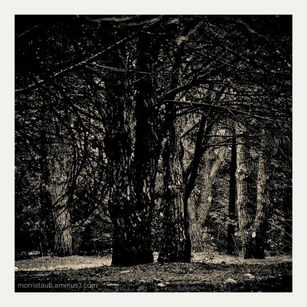 Trees in dark setting.