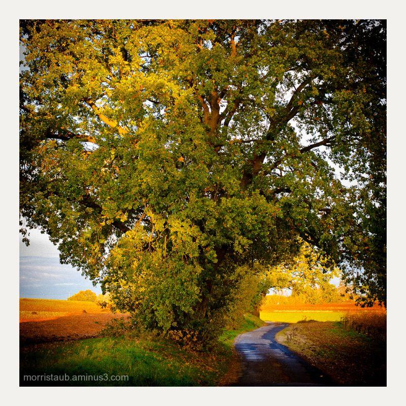Big tree overhang on road.