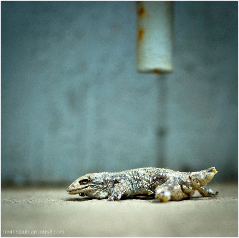 Dead lizard on windowsill.
