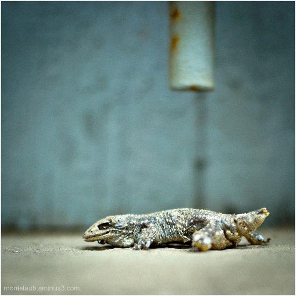 Dead lizard on windowsill.