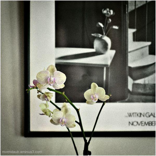 Chez Mondrian with flowers.