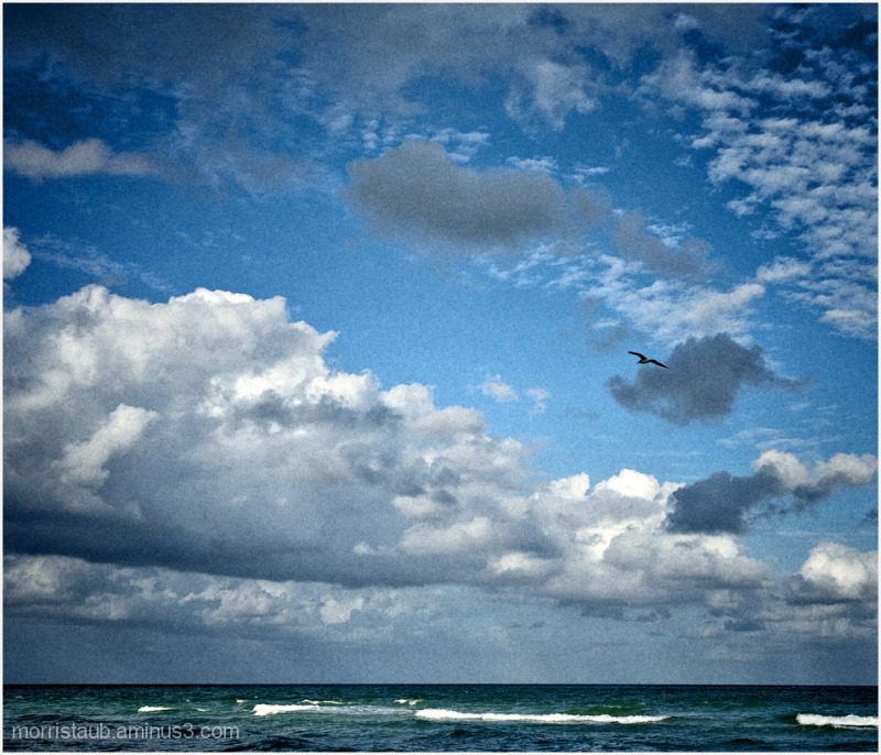 Seagull flying in blue sky and white puffy clouds.