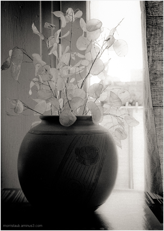 Vase with transparent leaves still-life.