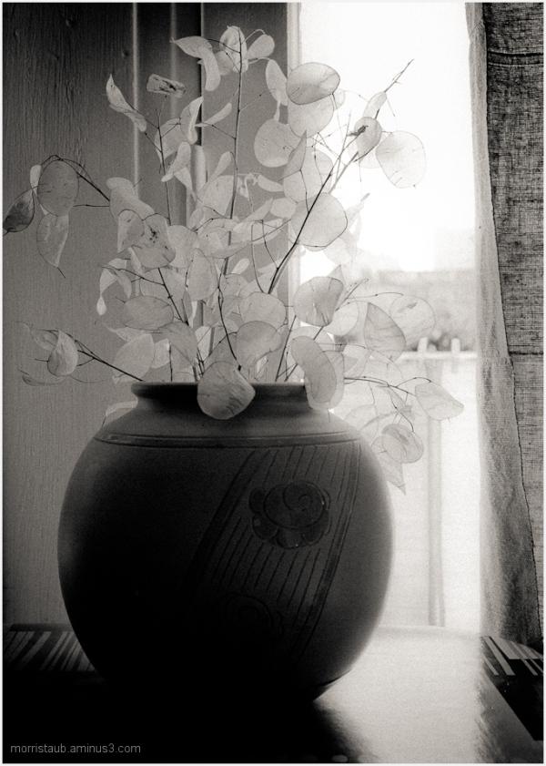 Vase with transparent leaves still-life.