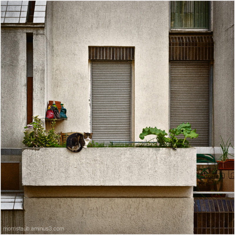 Cat sitting on concrete wall.