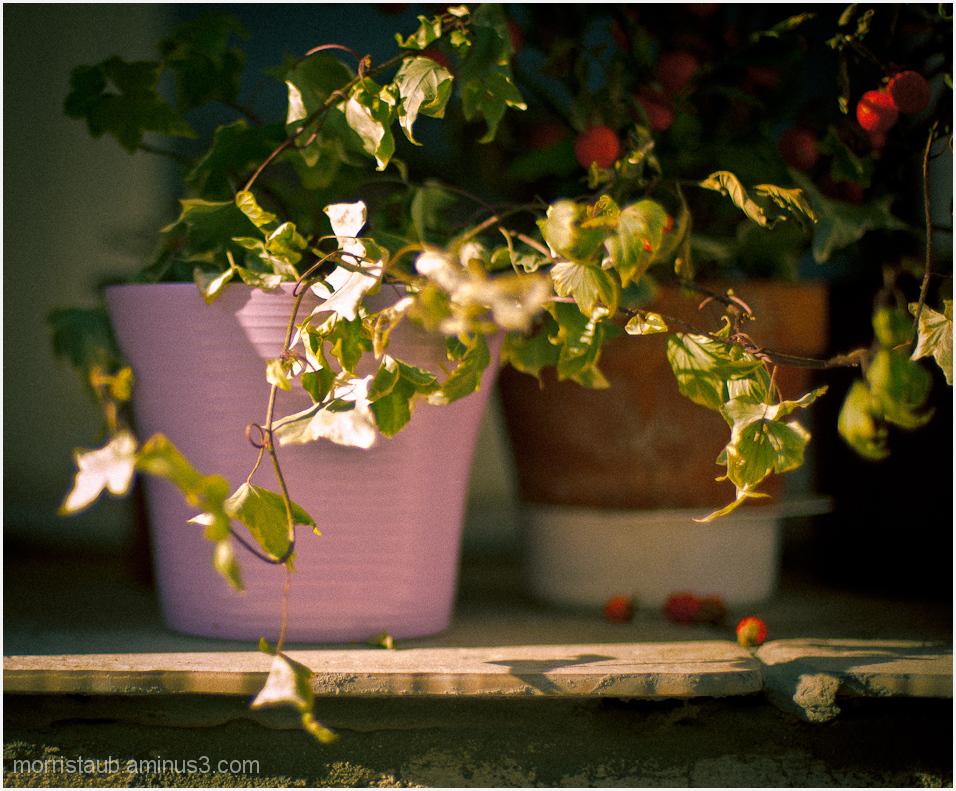 Plants on a windowsill.