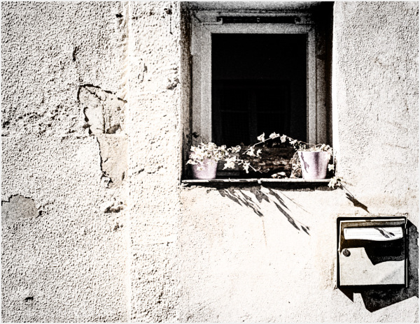 Potted plants on a windowsill.