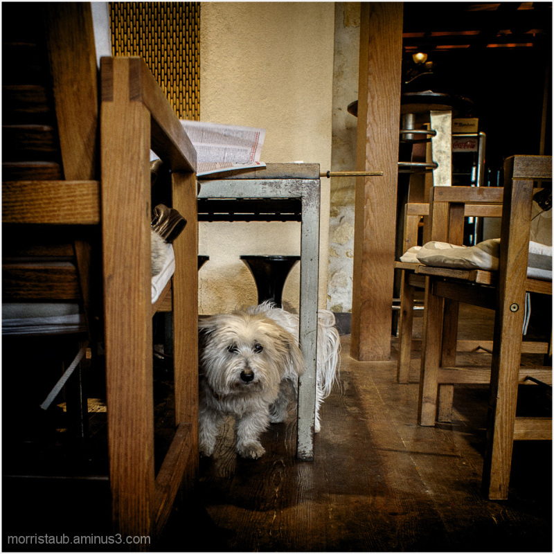 Dog in a cafe.