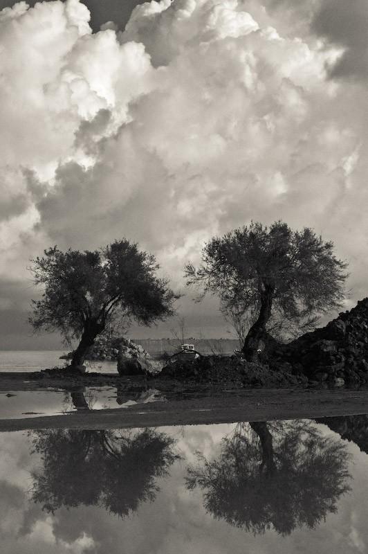 2 δέντρα κάτω από τον ουρανό-2 trees above the sky