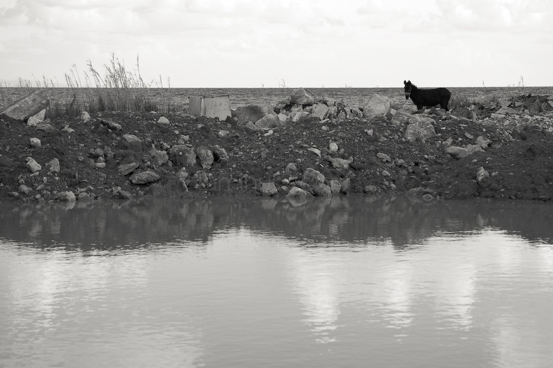 Donkey and water