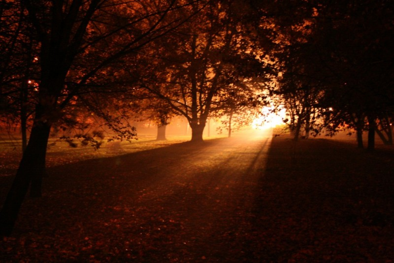 forest light park trees