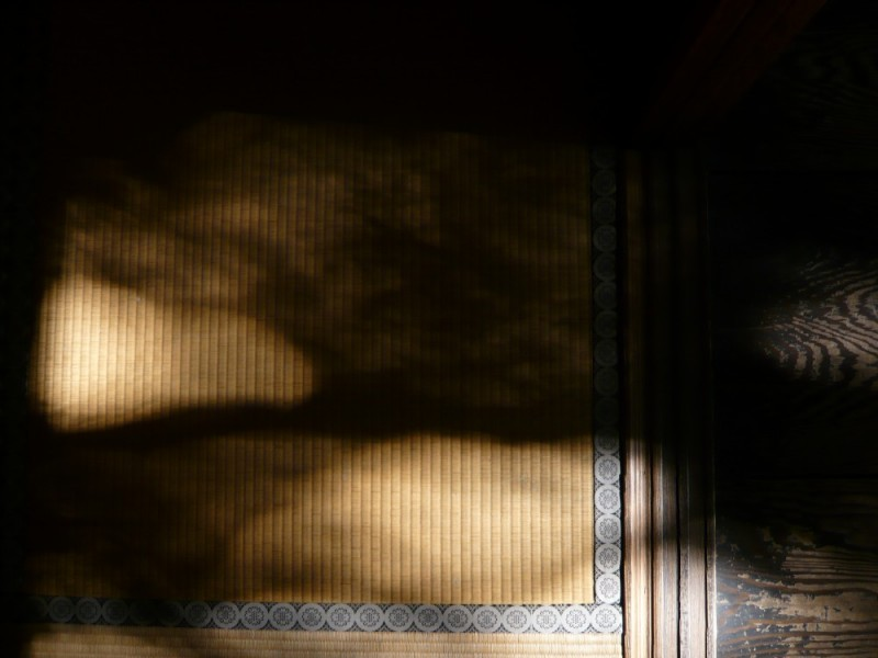 Late Afternoon Tatami Mats at Koto-in Temple (高桐院)