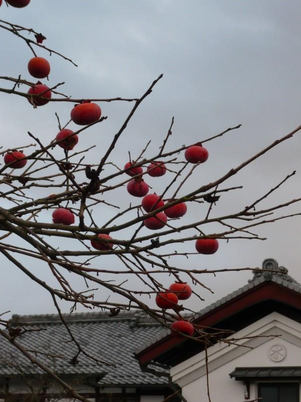 Persimmons in December