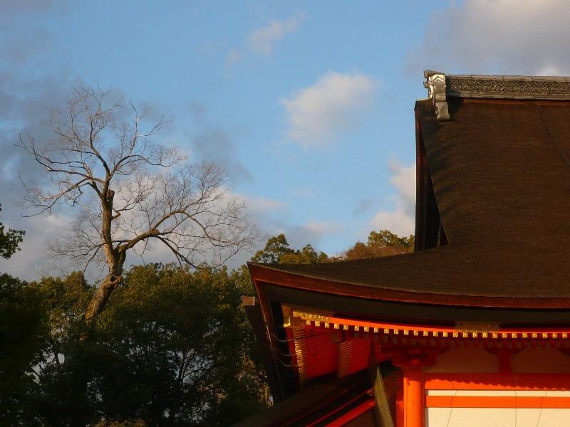Winter Sky, Yasaka Shrine (八坂神社)