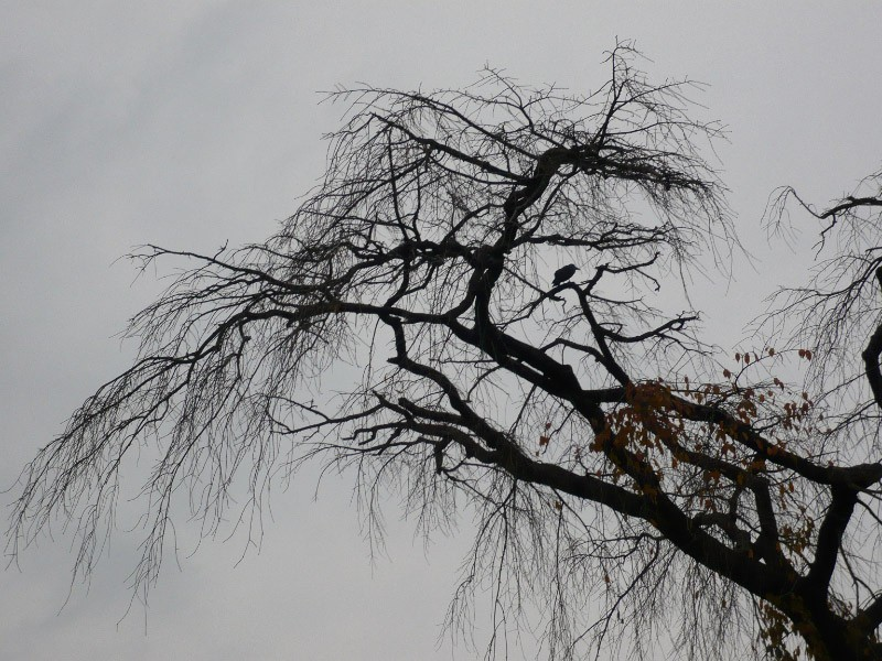 Winter (冬)