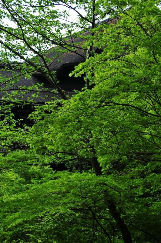 Spring at Kiyomizu Temple (清水寺)
