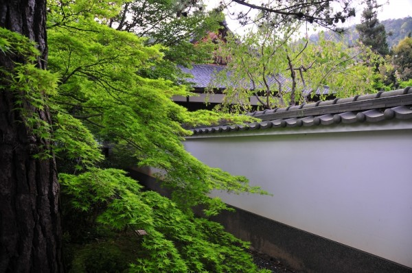 Spring at Iwakura Jisso-in Temple (岩倉実相院)
