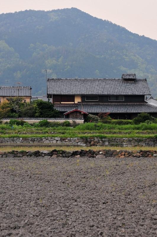 Spring Field, Iwakura (岩倉)
