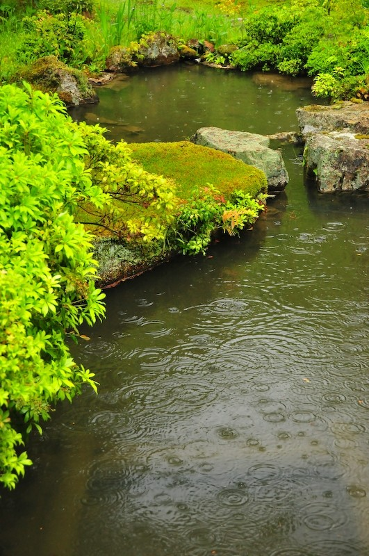 Spring Rain, Iwakura Jisso-in Temple, 1 (岩倉実相院)