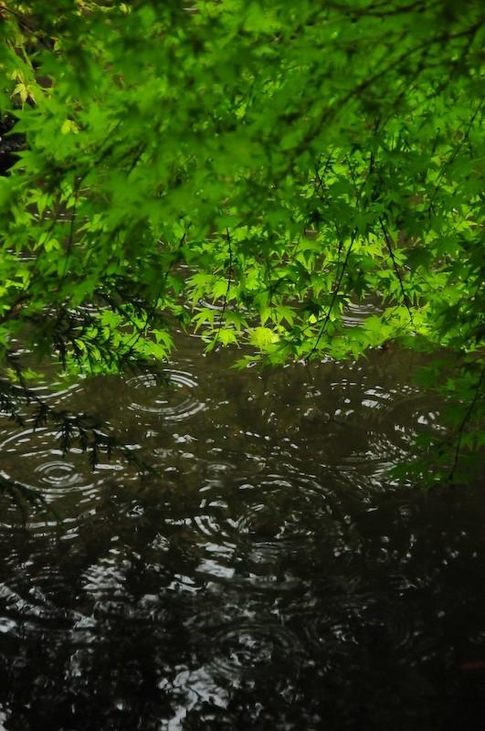 Spring Rain, Iwakura Jisso-in Temple, 4 (岩倉実相院)